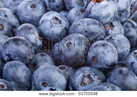 Bilberries Background