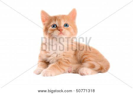 Orange Kitten With Blue Eyes