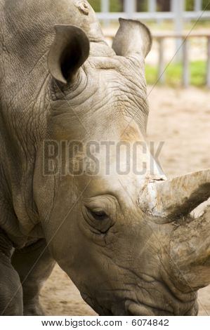 rhinoceros steps on an enclosure