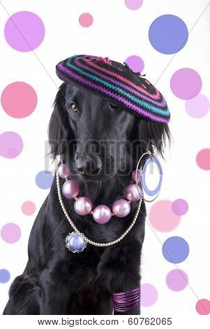 Female Dog With Jewels