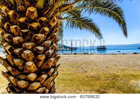 Palm At Seaside With Visible Ship And Harbour.