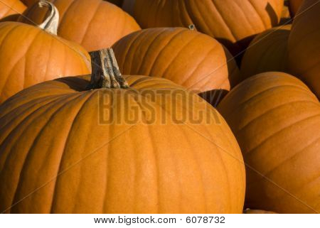 Group Of Halloween Pumpkins