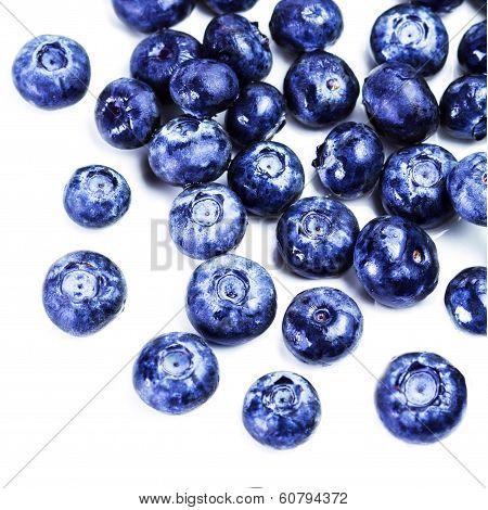 Blueberry Antioxidant Superfood Isolated On White Background  Macro. Fresh Blueberries Isolated On W