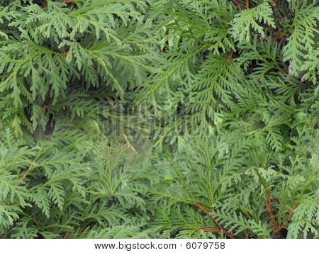 Seamless Pine
