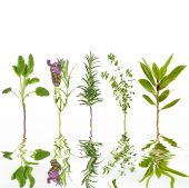 Sage, lavender, rosemary, thyme and bay leaf herbs, with reflection in rippled grey water, over white background. poster