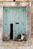 multicolored cat sitting in the window at greek village poster