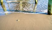 Single starfish waits for the refreshing waves of the Atlantic surf to sweep him up.  Myrtle Beach State Park  South Carolina poster