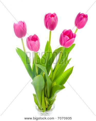 Five Pink Tulips Bouquet
