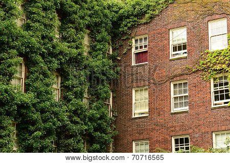 Ivy Walls