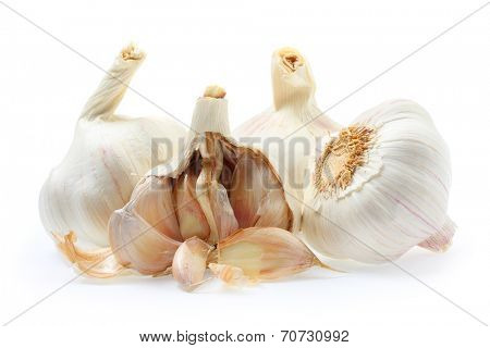 The Garlic (Allium sativum) has a long history of use in practices of herbal medicine. Central European folk beliefs considered garlic a powerful ward against demons, werewolves, and vampires.