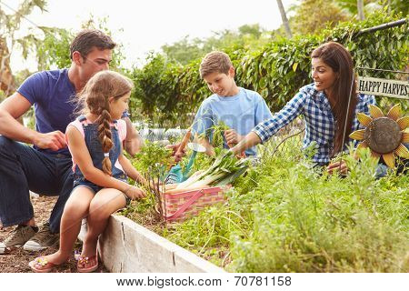 Family Working On Allotment Together