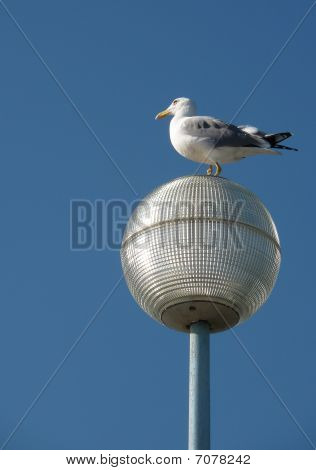 Seagull perched on round, shiny street lamp, with blue sky. poster