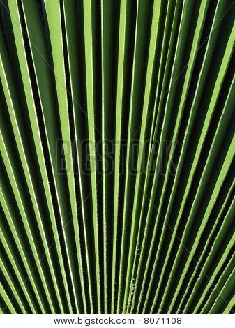 leaf of palm tree