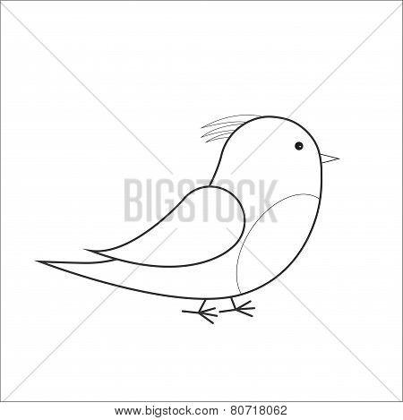 Bird vector outline