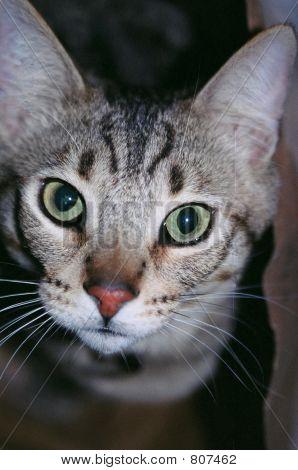 Bright eyed kitty