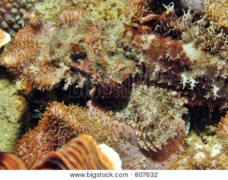 Camouflaged Fish
