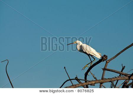 White Bird Sitting On The Tree