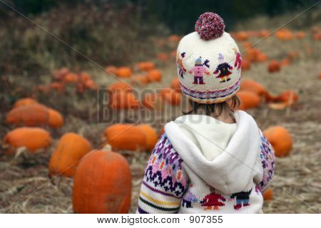 Looking Over Pumpkin Patch #1