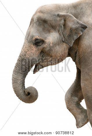 Profile Portrait Of A Happy Elephant