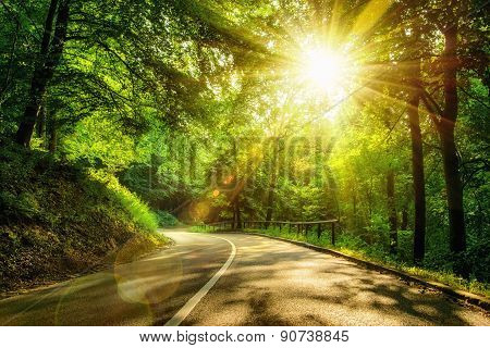Scenic Road In A Forest