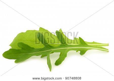 fresh rucola leaves (Eruca sativa)  on a white background