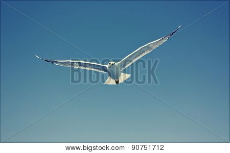 Photo of seagull flying in the sky - retro styled photo