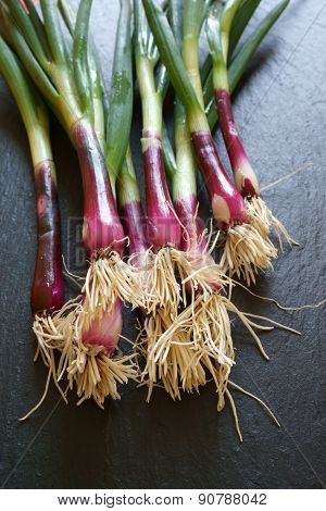 Red Fresh Spring Onions