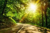 Landscape shot with the gold sun rays illumining a scenic road in a beautiful green forest with light effects and shadows poster