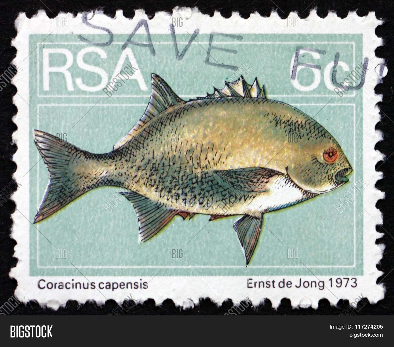 Postage Stamp South Af...