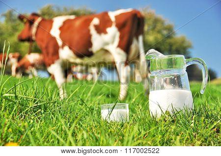 Cow and jug of milk. Emmental region, Switzerland