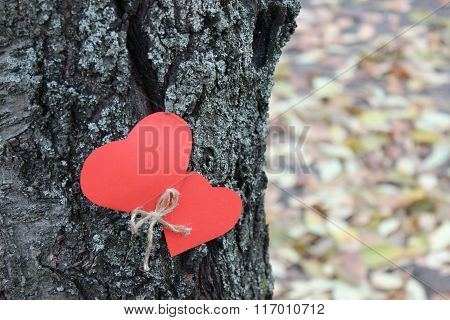 Two Heart On The Tree