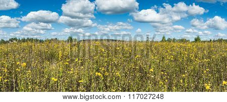 Meadow With Yellow Wildflowers Panoramic Landscape