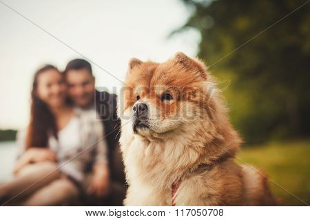 Chow Chow Dog Portrait Outdoor