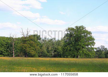Meadow In A Floodplain