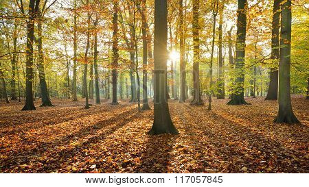 Beautifully lit autumn forest with ground covered with orange leaves. Nachtegalenpark In Antwerp
