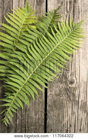 Green Fern Leaves On A Wooden Dark Background