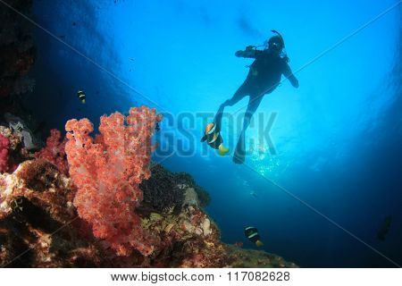 Scuba diving exploring coral reef underwater sea ocean