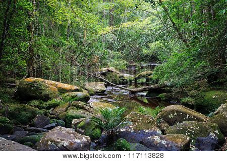 Drought River In Tropical Rainforest