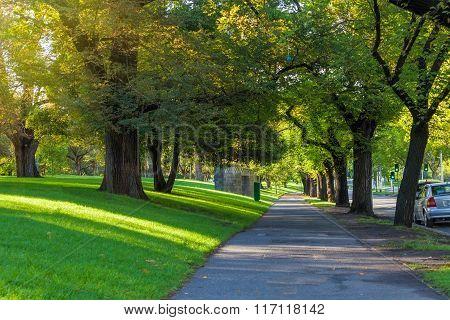 Trees Alley Footpath St Kilda Road