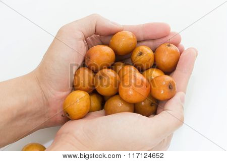 jujube or chinese date on white background poster