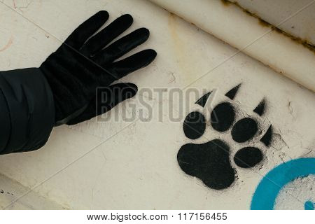 Footprint Of An Animal