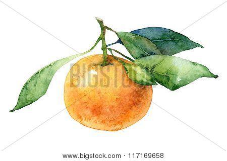 Single mandarin with leaves