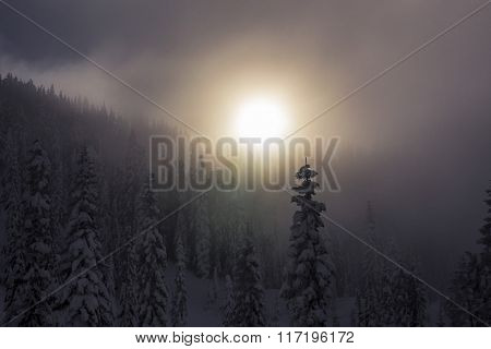 Late Hazy Sunset Through Fog Over Snowy Tree Tops in Mountain Forest