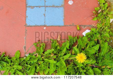 Pink or orange and pale blue ground with weeds or small plants with a yellow flower. Picture can be used as a background.