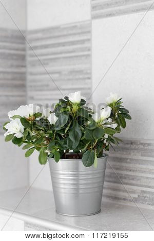 Decorative House Plant In A Metal Light Gray Bucket