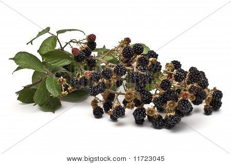 Some natural blackberries isolated on a white background. poster
