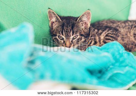 Sleepy Little Tabby Kitty Just Waking Up