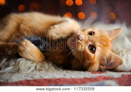 Cute Fluffy Red Kitten Playing With Toy Mouse