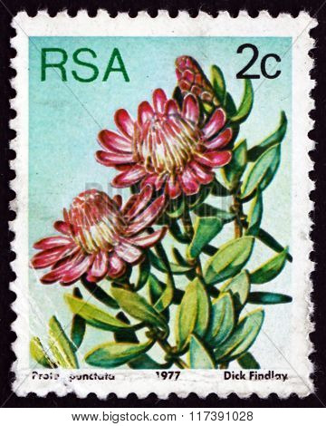 Postage Stamp South Africa 1977 Water Sugarbush, Flowering Plant
