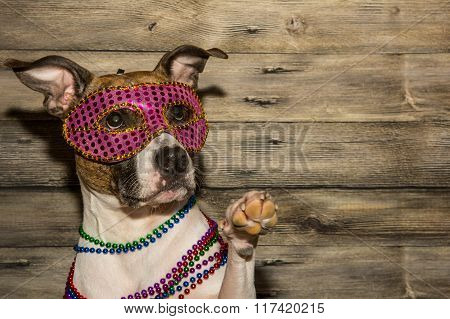 A cute dog dressed up for Mardi Gras.